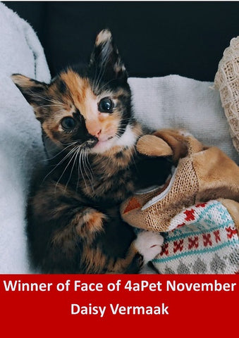 •	Winner of Face of 4aPet November 2020