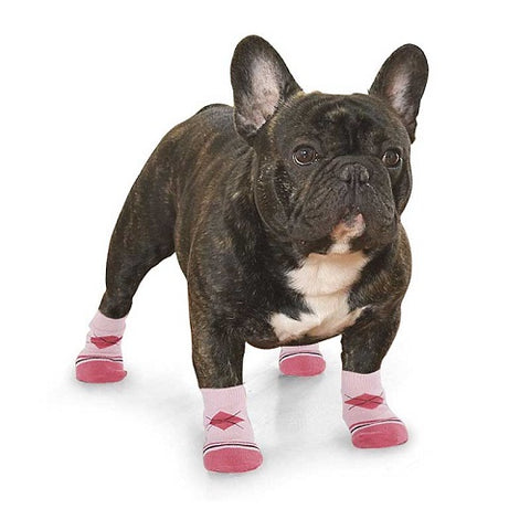 dog wearing pink socks