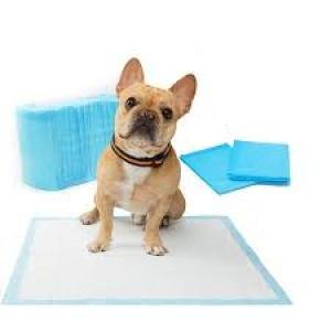 Dog sitting on Pet Training Pads.