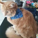 Small Pet Bandanna - ASSORTED COLOURS - 4aPet