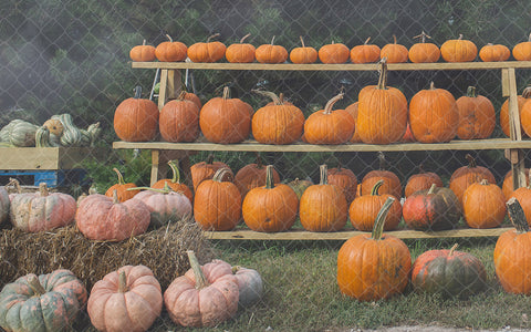 Fall Pumpkin Racks