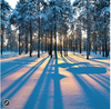 Zen Puzzles: Sunrise in a Winter Forest