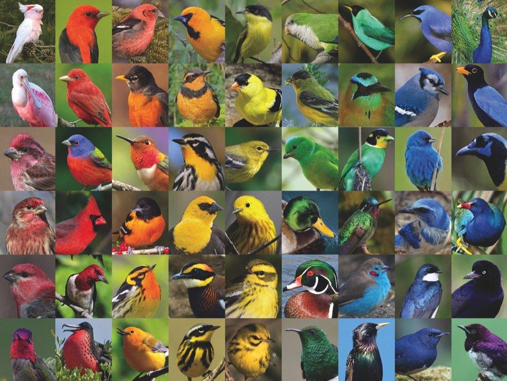 Rainbow of Birds - 1000 piece