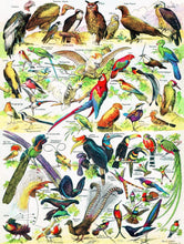 Load image into Gallery viewer, Birds ~ Oiseaux - 1000 piece