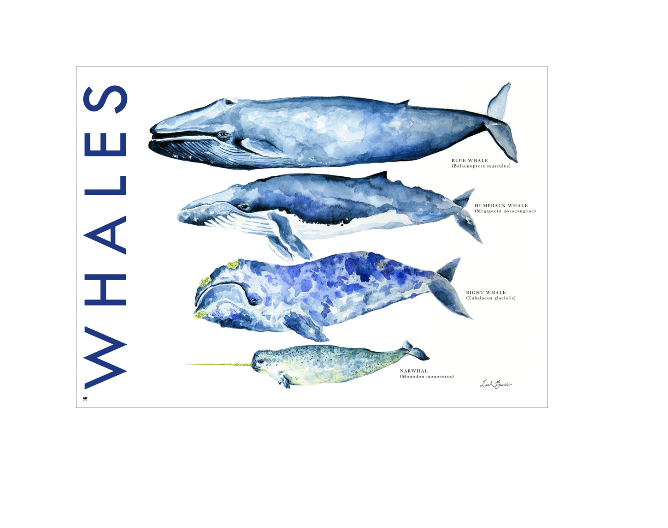 Whales - 500 piece