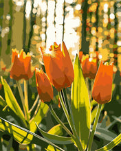 Load image into Gallery viewer, Morning Tulips
