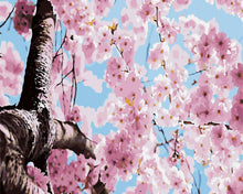 Load image into Gallery viewer, Cherry Blossom Tree