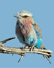 Load image into Gallery viewer, Colorful Bird