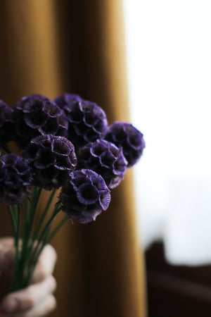 Scabiosa - dark purple