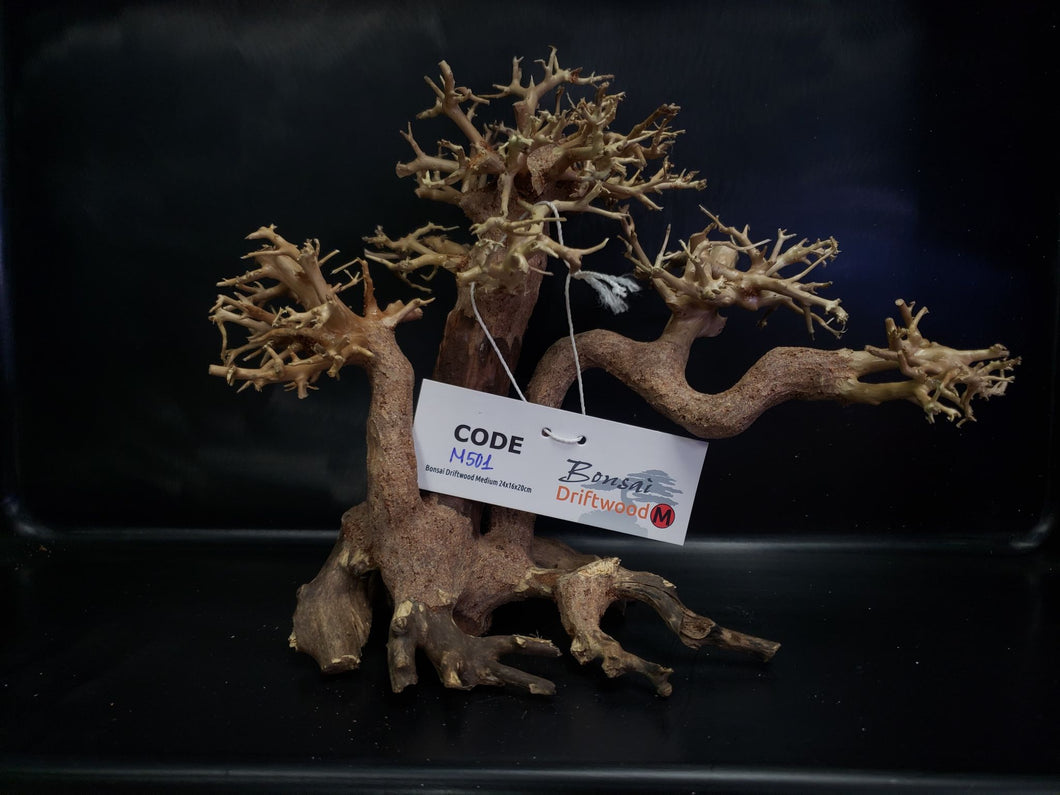 Wind Swept Bonsai Driftwood, Medium