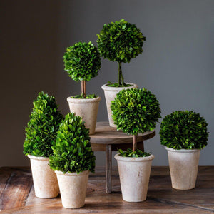 Collection of Boxwood Topiaries, Set of 6 - Sixty Park Lane