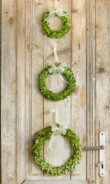 Preserved Boxwood Wreaths with Ivory Ribbon, Set of 3 - Sixty Park Lane