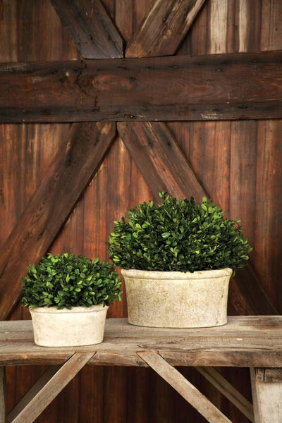 Potted Oval Preserved Boxwood, Large - Sixty Park Lane