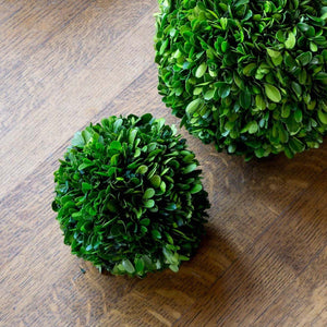 "Preserved Boxwood Ball, 6"" Dried Botanical SIXTY PARK LANE"