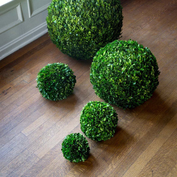 "Preserved Boxwood Ball, 10"" Dried Botanical SIXTY PARK LANE"