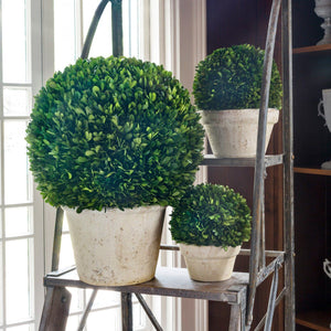 Potted Preserved Boxwood Ball, Medium - Sixty Park Lane