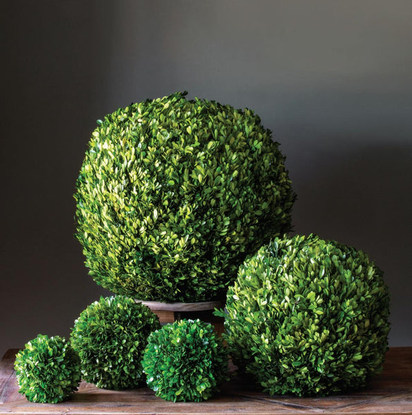 "Preserved Boxwood Ball, 8"" Dried Botanical SIXTY PARK LANE"