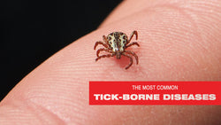 Tick Diseases You Need to Know About in the United States