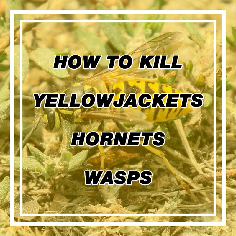 How to Remove Wasps, Hornets, Yellow-jackets