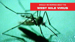 What is West Nile Virus And How to Avoid It