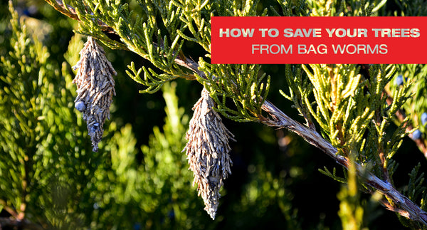 How to Save Your Trees From Bagworms