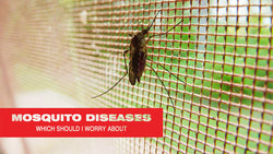 Mosquito Diseases You Need to Know About in the United States
