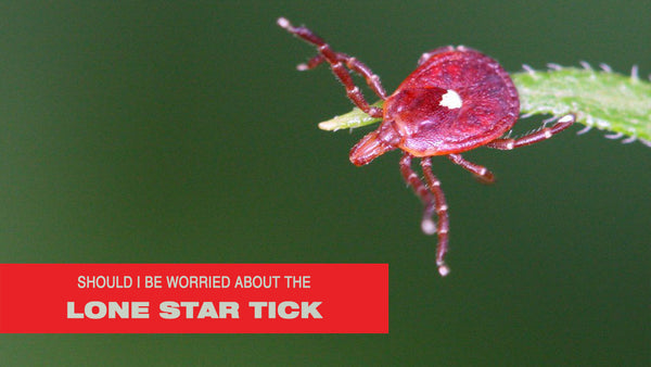 Should I Be Worried About the Lone Star Tick?