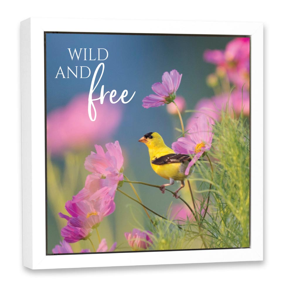 Open Art - Wildbirds - Free