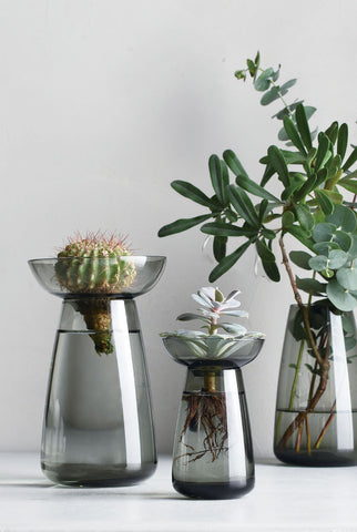 Three Kinto Aqua Culture Vases in a translucent grey finish, nourishing a cactus, leafy succulent and a woody plant with long curved leaves