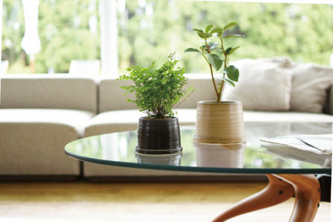 Kinto's 192 Plant Pots (1 each in black and beige) on a glass coffee table in a sunlit lounge room