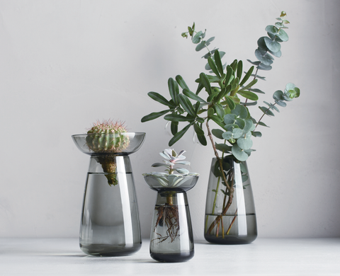 Three Aqua Culture Vases (translucent blue-grey vases with curved conical shapes) holding some succulents and leafy plant cuttings