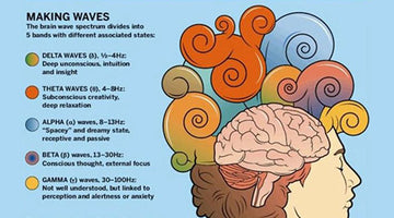 Brain Waves Explained