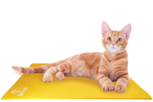 Ginger Cat on Pet Yoga Mat