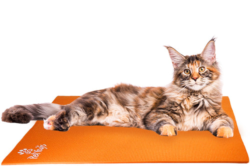 Maine Coon Cat on Pet Yoga Mat