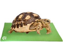 Load image into Gallery viewer, Turtle on Mini Pet Yoga Mat