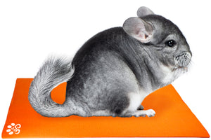 Chinchilla on Mini Pet Yoga Mat