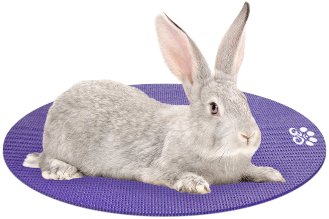 Rabbit on Mini Round Pet Yoga Mat