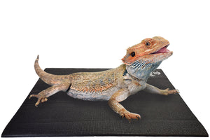 Bearded Dragon on Square Pet Yoga Mat