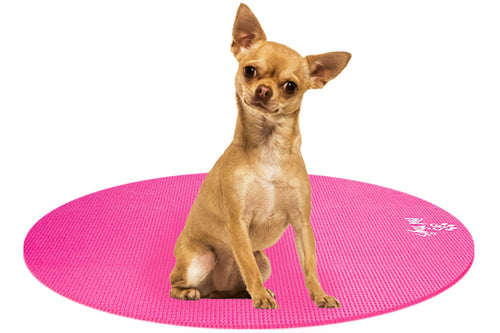 Chihuahua Dog on Round Pet Yoga Mat