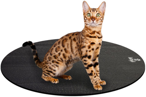 Bengal Cat on Round Pet Yoga Mat