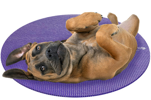 Cane Corso Dog on Round Pet Yoga Mat