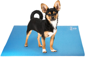Longhair Chihuahua Dog on Pet Yoga Mat
