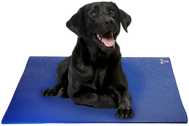 Black Labrador Retriever Dog on Pet Yoga Mat