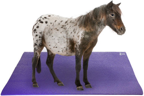 Miniature Horse on Pet Yoga Mat