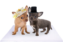 Load image into Gallery viewer, Bride and Groom Chihuahua Puppies on White Wedding Mat