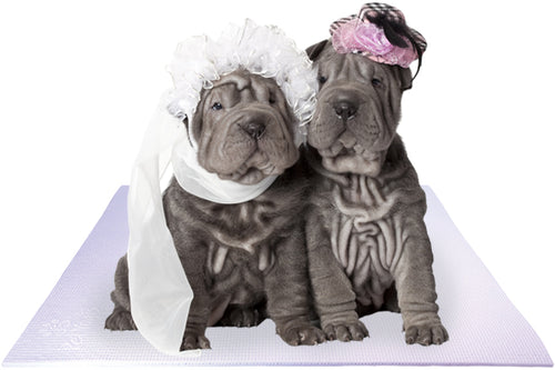 Bride and Groom Shar-Pei Dogs on White Wedding Mat