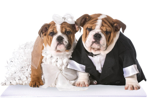 Bride and Groom Bulldogs on White Wedding Mat