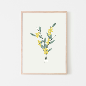 Australian Golden Wattle Flower Art Print