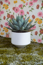 Load image into Gallery viewer, CONE PLANTER - SMALL WHITE