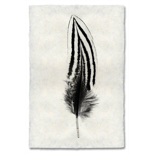 FEATHER STUDY #2